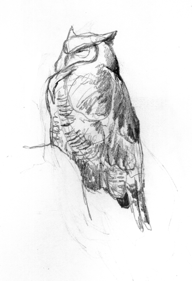 Great Horned Owl pencil sketch