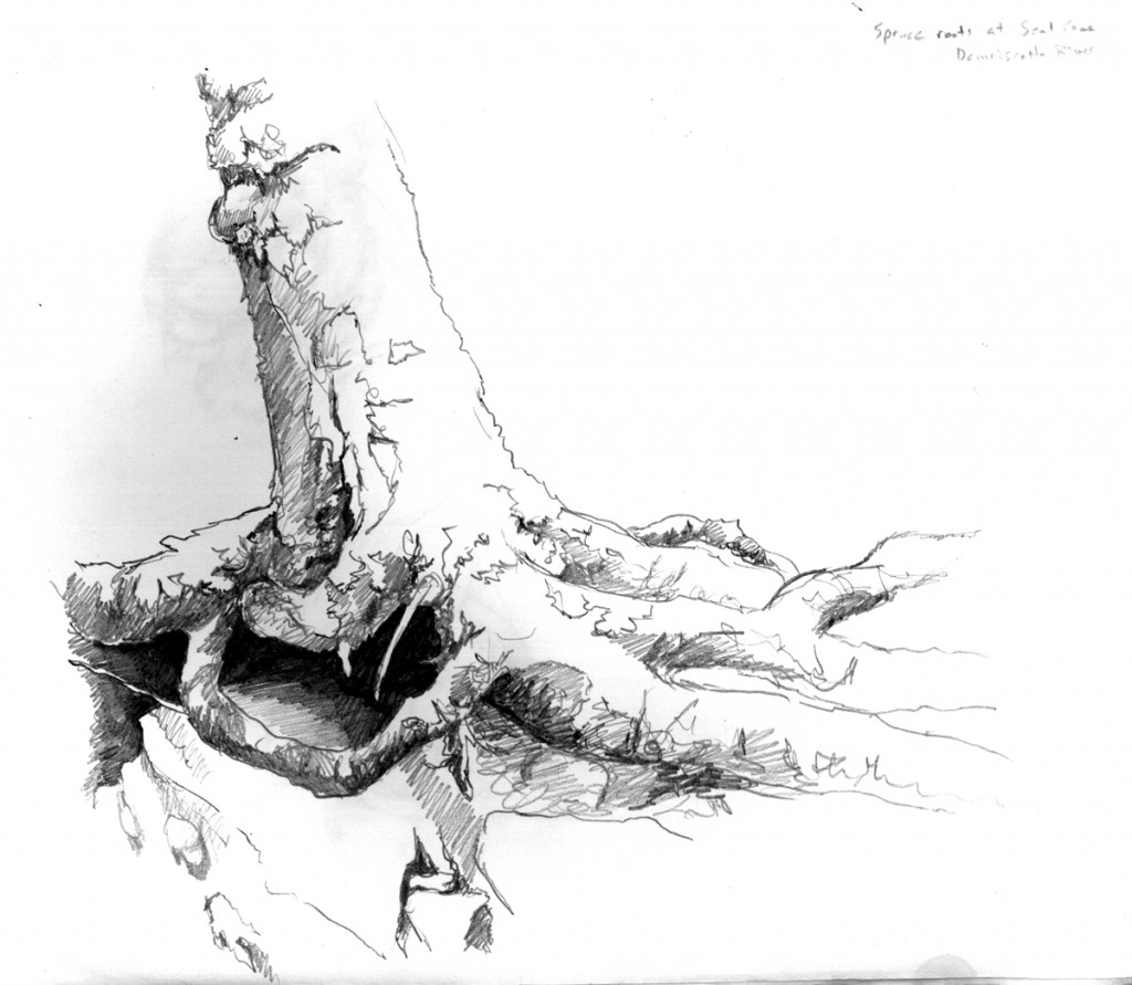 spruce roots pencil sketch
