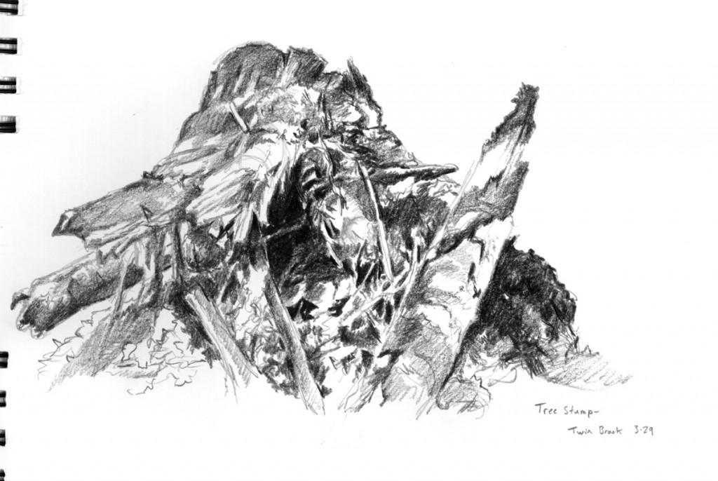 decaying stump ebony pencil sketch